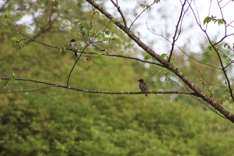 BirdsMay17-18-3.jpg