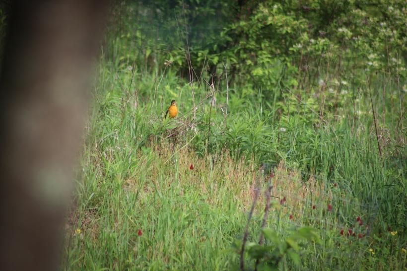 BirdsMay17-18-7.jpg