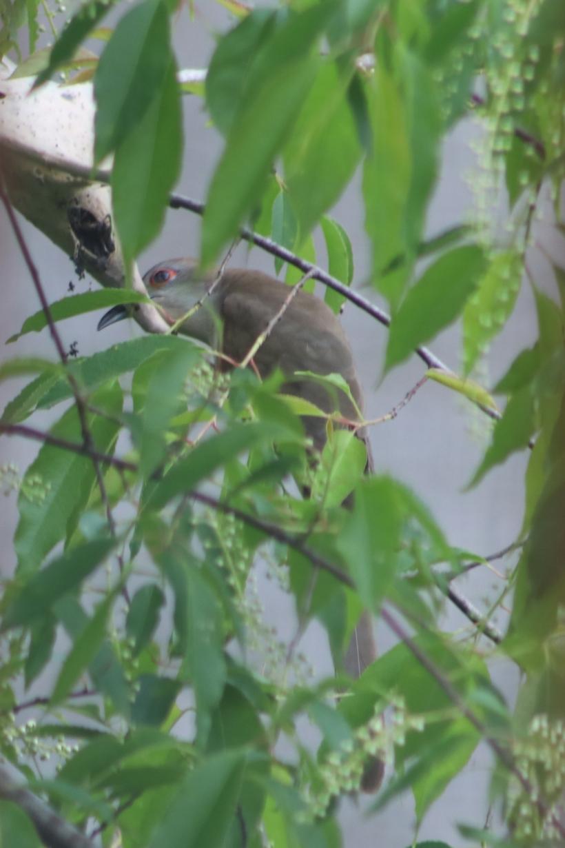 BirdsMay22-2