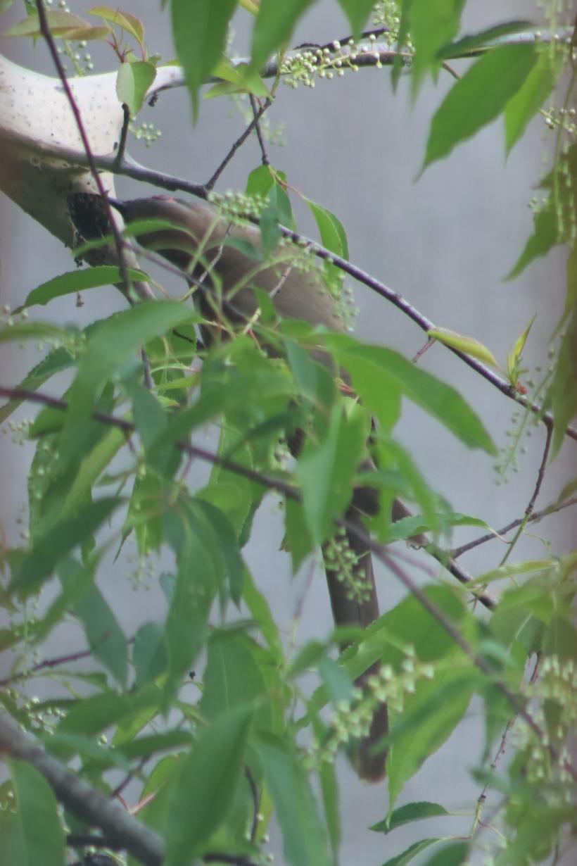 BirdsMay22-3