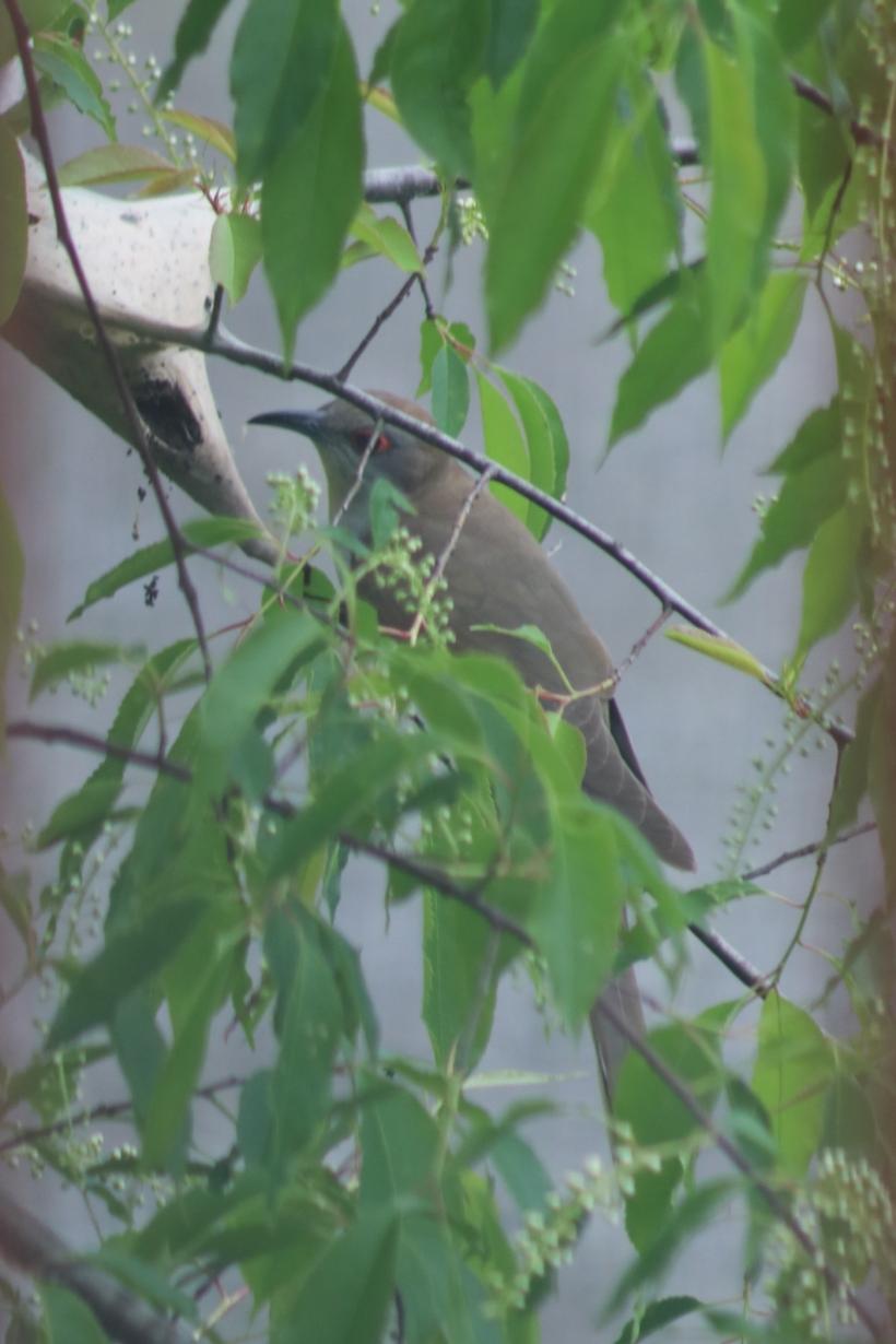 BirdsMay22-4