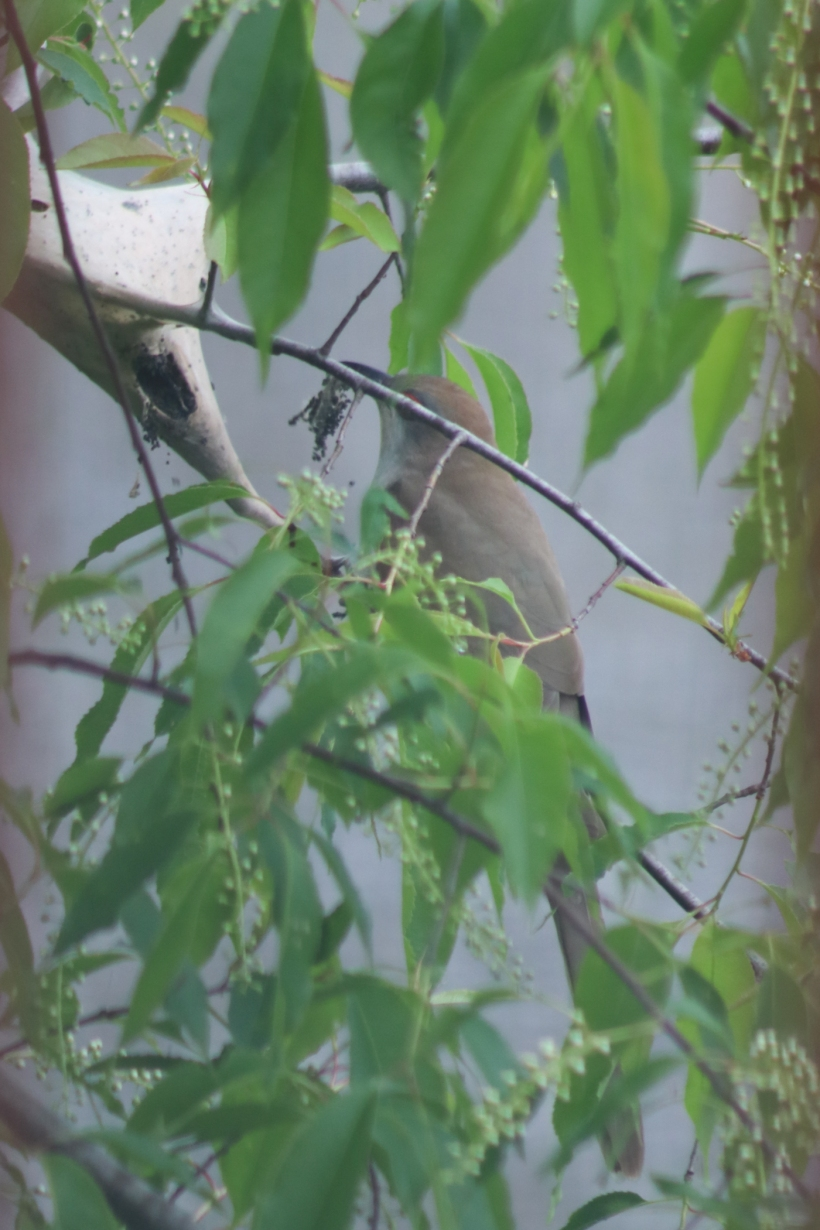 BirdsMay22-5